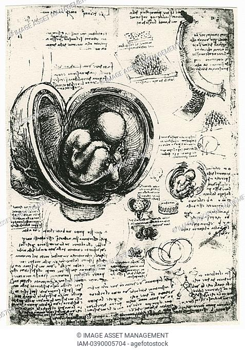 Leonardo da Vinci 1452-1519 Italian painter, sculptor, engineer, architect  Drawing of a foetus in utero