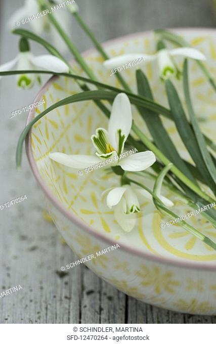 Snowdrops in a bowl