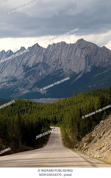 Road passing through a forest, Jasper National Park, Alberta, Canada
