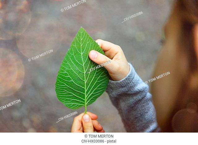 Girl examining veins of green leaf