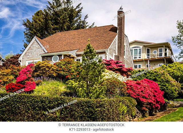 A home with a variety of rhododendron bushes in Wheeler, Oregon, USA