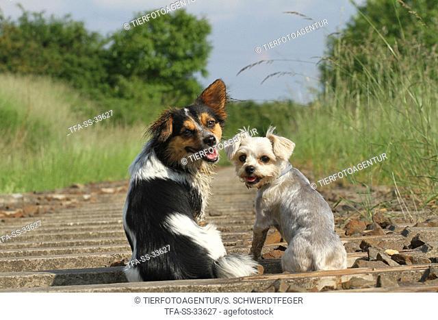 2 cute mongrels