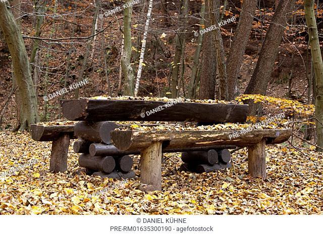 Forest trail in autumn, Harz District, Harz, Saxony-Anhalt, Germany / Waldweg im Herbst, Landkreis Harz, Harz, Sachsen-Anhalt, Deutschland