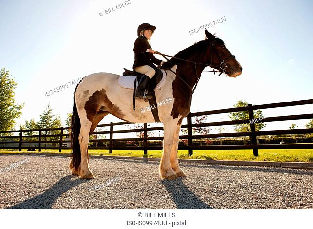 Boy horse riding in sunlight