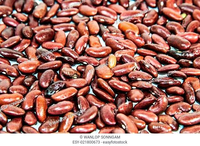 Photos of lentils on a white background