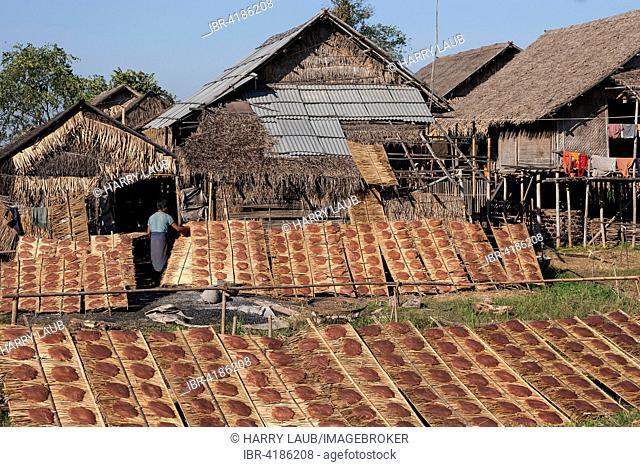 Rice cakes drying in the sun, near Lin-Gin, Inle lake, Shan State, Myanmar