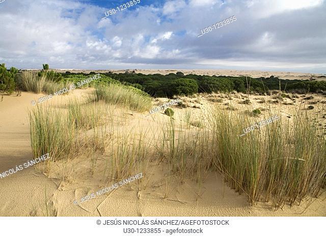 Doñana National Park, El Rocío  Huelva, Andalucia  Spain