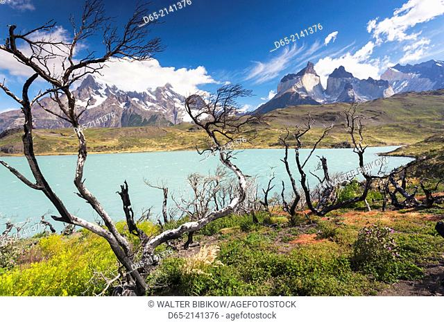 Chile, Magallanes Region, Torres del Paine National Park, Lago Pehoe, landscape with fire damage