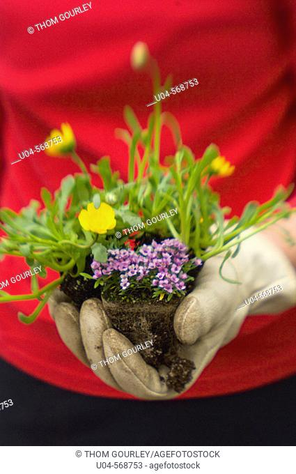 Gardener's hand ready to plant mixed flower starts