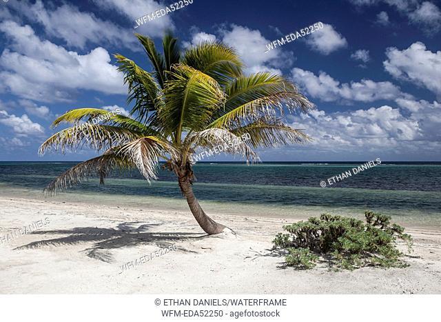 Sandy Beach in Belize, Turneffe Atoll, Caribbean, Belize