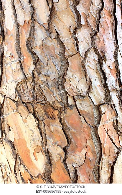 Close Up of Tree Bark