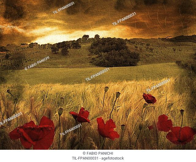 Italian countryside with red poppies