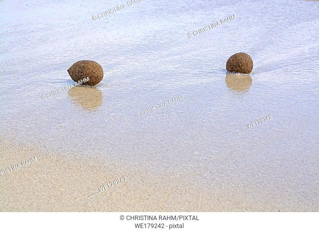 Fiber balls of seagrass washed up on sandy beach in Mallorca, Spain