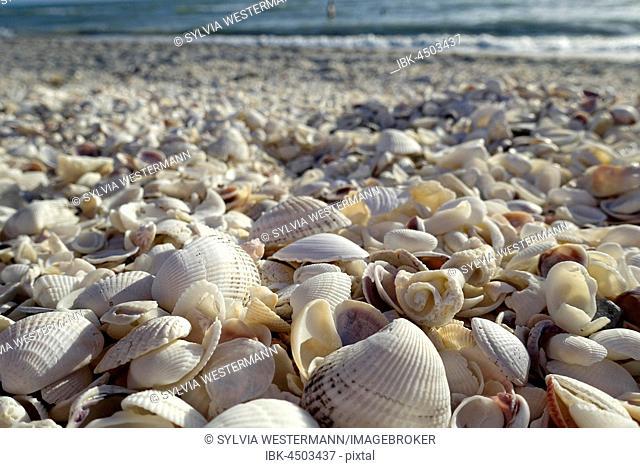 Shells on the beach, Bowman Beach, Sanibel Island, Florida, USA