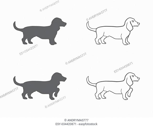 basset in different poses on an isolated background