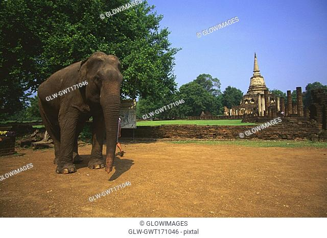Elephant standing in a garden with a temple in the background, Amphoe Si Satchanalai, Sukhothai, Thailand