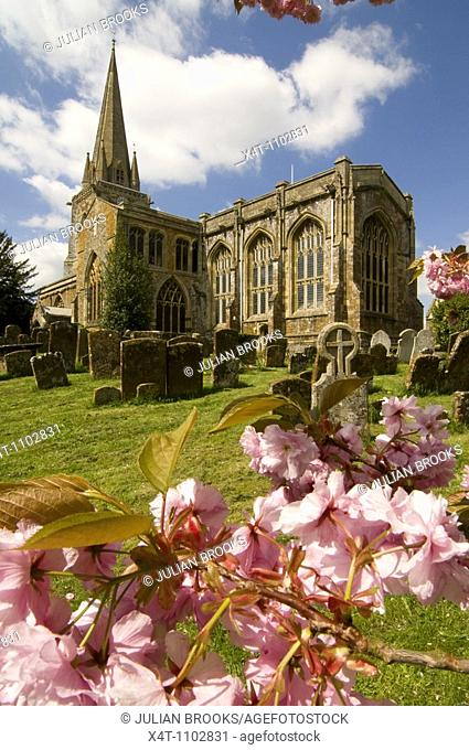 The church at West Adderbury in the Cotswolds, Oxfordshire, UK, with cherry blossom