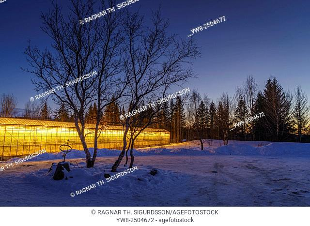 Greenhouse heated with Geothermal energy, Iceland