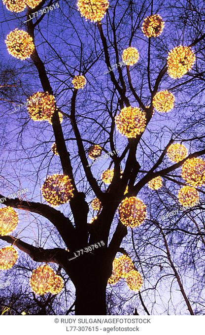 Christmas lights on tree in Central Park. New York City, USA