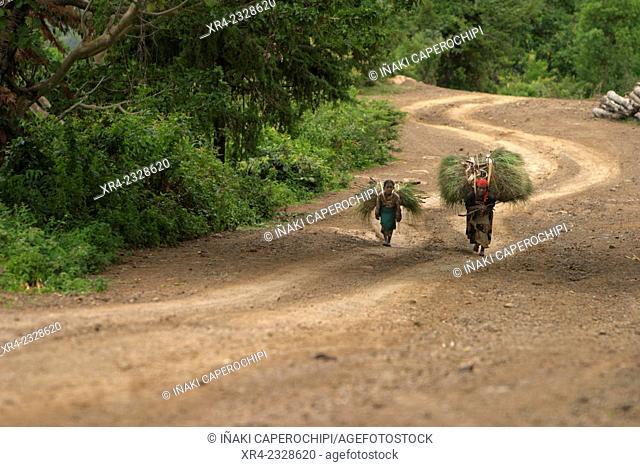 Women , Chencha, Oromia Region, Ethiopia, Africa