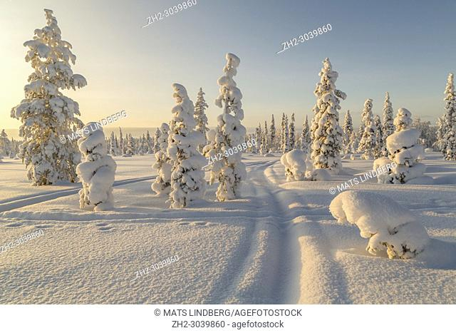 Winter landscape with snomobile track, clear skye and nice warm light, Gällivare county, Swedish Lapland, Sweden