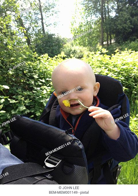 Caucasian baby smelling flower outdoors
