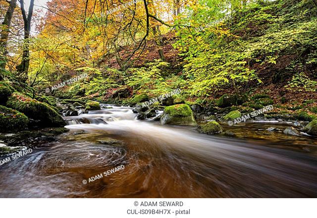 Moness Burn, Birks o' Aberfeldy, Perthshire, Scotland