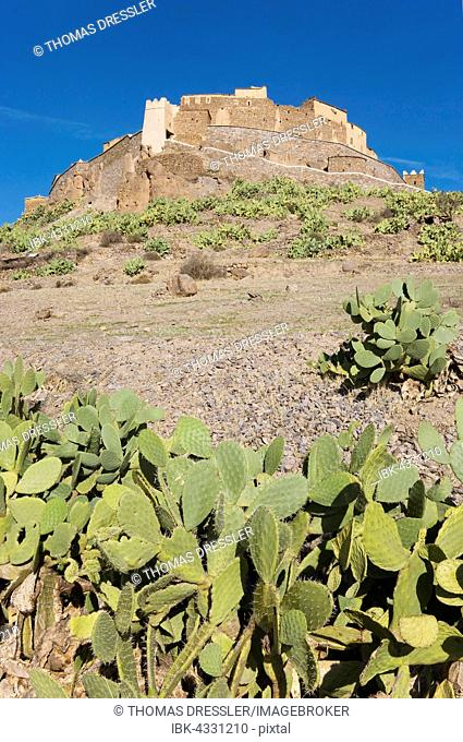 Agadir, fortified granary of Tizourgane in the Anti-Atlas mountains in southwest Morocco, prickly pear (Opuntia ficus-indica) growing on the slope, Morocco