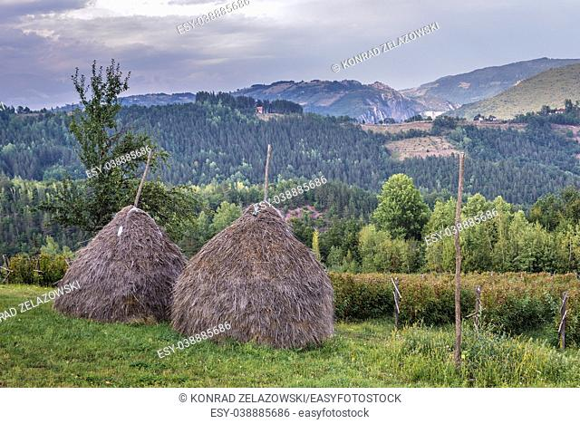 Haystacks on a meadow next to raspberry plantation in Arilje municipality of Zlatibor mountainous region in western part of Serbia