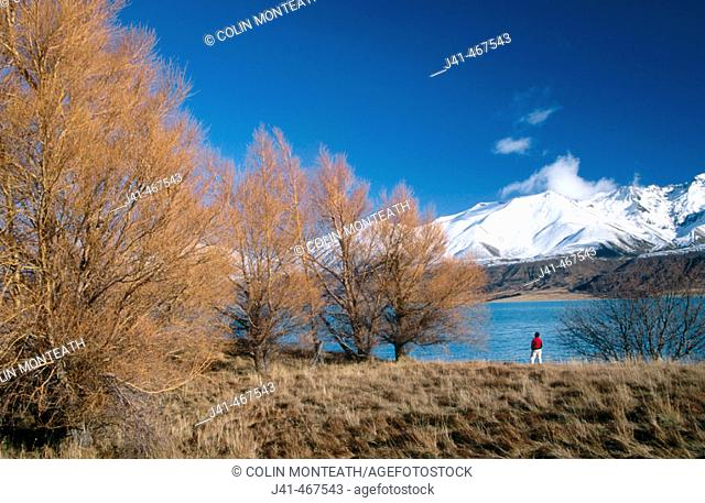 Lake Pukaki and Ben Oahu range. Tourists enjoy larch trees in autumn colours near Mount Cook station. New Zealand