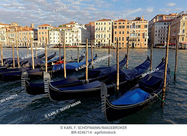 Grand Canal in the morning light with gondolas and Palazzi, Venice, Veneto, Italy