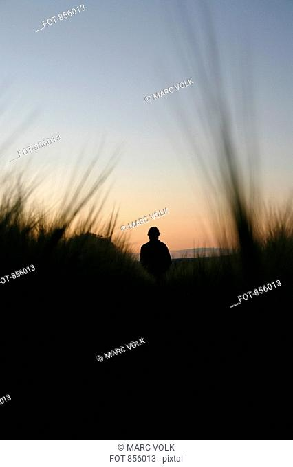 Rear view of a person watching the sunset in a field of rye