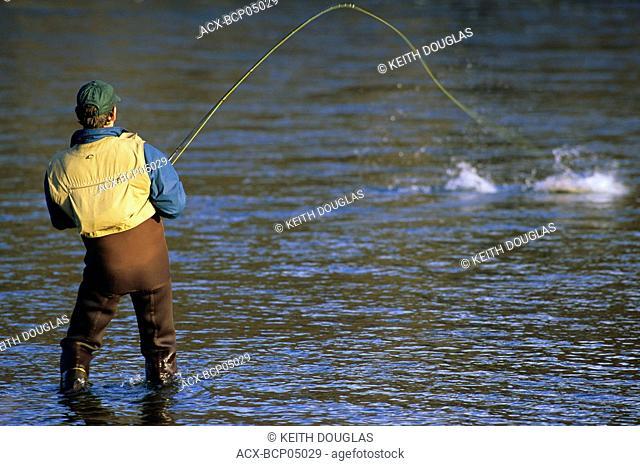 Flyfisherman playing steelhead, Bulkley river, British Columbia, Canada