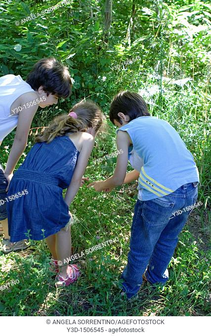 Three children playing with insects in the grass, Pozzuoli, Naples, Italy