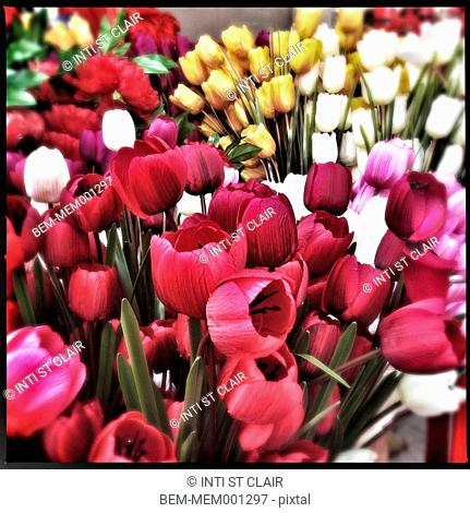 Bunches of tulip flowers for sale