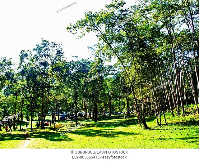 Camping field in the forest of Huay Nam Dung Natonal Park in Chiang Mai, Thailand