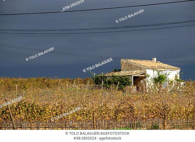 Storm clouds over the vineyards of Son Prim, Sencelles, Mallorca, balearic islands, spain, europe
