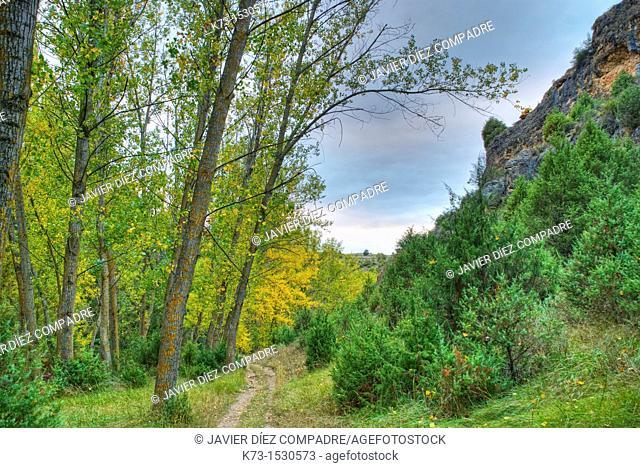 Hoces del Duraton Natural Park. Segovia Province. Castilla y Leon. Spain