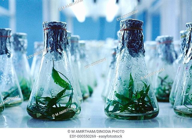 Tissue culture lab , flasks , India