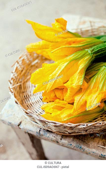 Basket of fresh courgette flowers, Tuscany, Italy