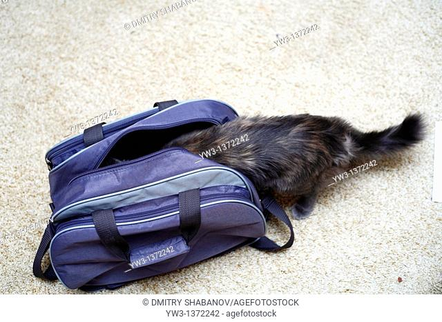 cat in the blue travel bag