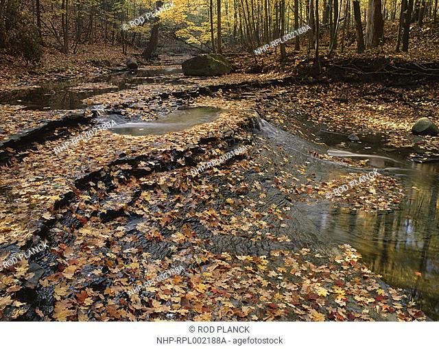 STREAM IN AUTUMN Cuyahoga Valley National Recreation Area, Ohio, USA