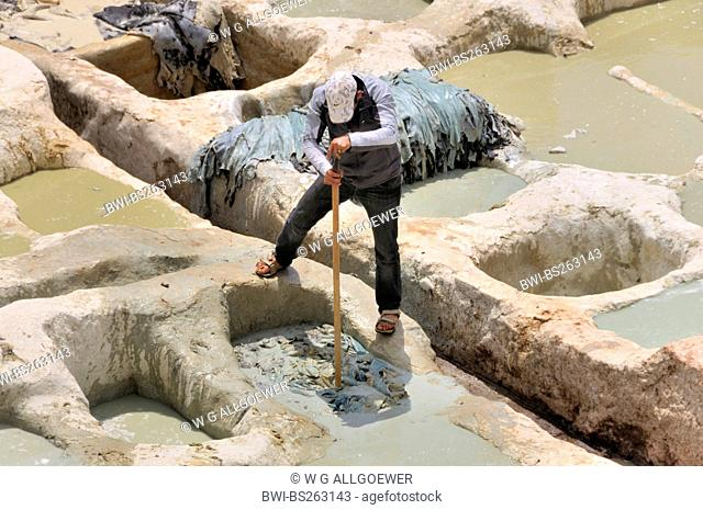 man watering leather in troughs of tanners' and dyers' quarter chouwara, Morocco, Fes