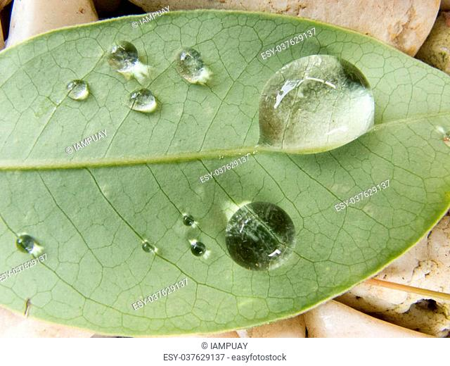 Water drop on green leaf on white rock