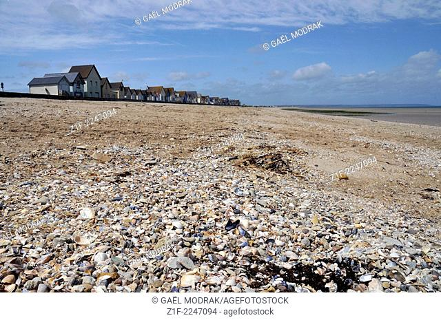 A beach in Normandy, covered with shells, Manche, France
