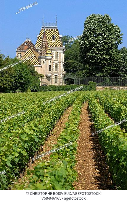 Vineyard and castle of Aloxe-Corton, Cotes d'Or, France