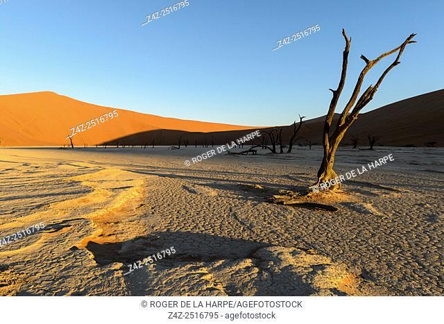 Desert scenery at Dead Pan. Sossusvlei. Namib-Naukluft National Park. Near Sesriem. Namibia