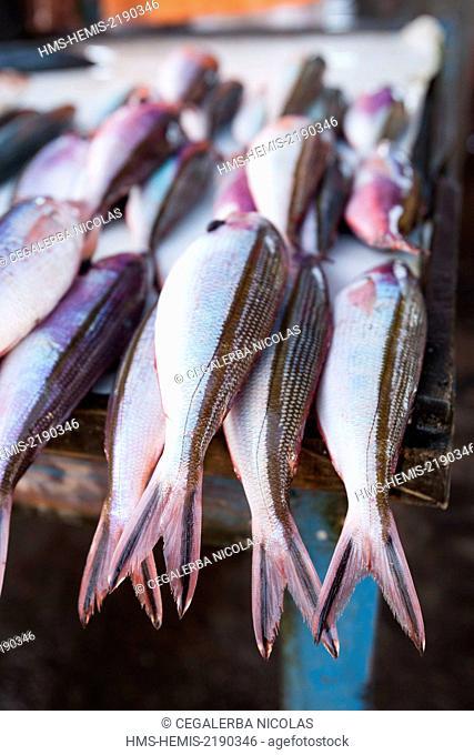 Indonesia, Lesser Sunda Islands, Alor Island, Kalabahi, fishes in Kalabahi market
