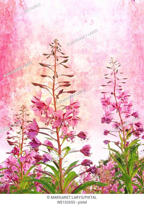 Grunge background with wildflowers