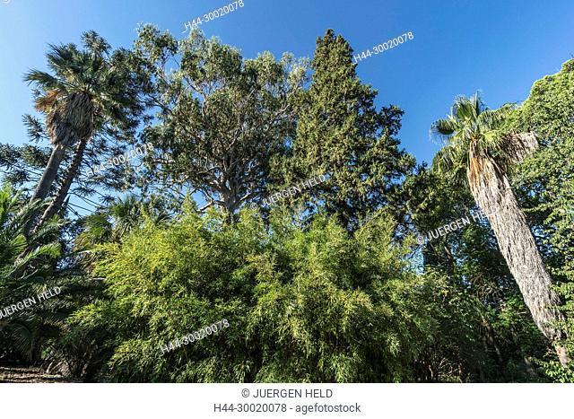 France, Cote d'Azur, Provence-alpes-cote, Cap Antibes, Jardin Thuret, Villa Thuret Botanic Gardens, 1600 exotic species, Eucalyptus Tree